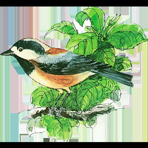村の鳥 ヤマガラ
